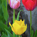 Tulips by Cristina Stefan