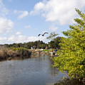 Turkey Creek In Palm Bay Florida by Allan  Hughes