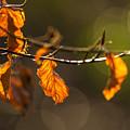 Twigs by Jacek Tomczak