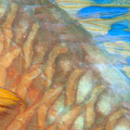 Underwater Close-up by Dave Fleetham - Printscapes
