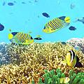 Underwater Panorama by MotHaiBaPhoto Prints