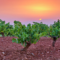 Vineyards At Pink Sunset by Guido Montanes Castillo