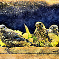 Vintage Bluebird Print by Tina LeCour