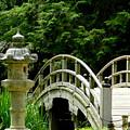 Virginia Bridges -japanese Garden by Arlane Crump