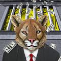 Wall Street Predator by Keith Dillon