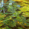 Water Lilies by Robert Nizamov
