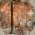 Watercolour Painting Of Beautiful Image Of Red Deer Stag In Fogg by Matthew Gibson