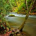 Whatcom Creek by Idaho Scenic Images Linda Lantzy