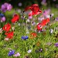 Wild Flowers And Red Poppies by Natasha Balletta