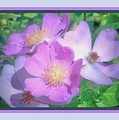 Wild Roses by Shirley Moravec