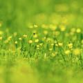 Wildflowers by Bryan Pollard