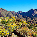 Wildflowers On Rocks, Anza Borrego by Panoramic Images