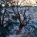 Winter At Grand Canyon by Jacek Joniec