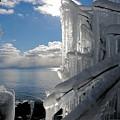Winter Beauty by Sandra Updyke