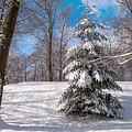 Winter Delight by Jenny Rainbow