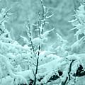 Winter Wonderland In Switzerland by Susanne Van Hulst