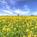 Yellow Fields Of Summer by David Pyatt
