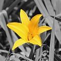 Yellow Flower by Erik Dunn