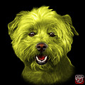 Yellow West Highland Terrier Mix - 8674 - Bb by James Ahn
