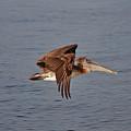 20- Pelican by Joseph Keane