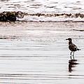 Private Beach Bastendorff by Angus Hooper Iii
