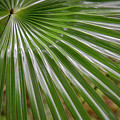 Rainforest At Foxground, Kiama by Stuart Mackenzie