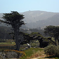 Sharp Park, Pacifica by Marte Thompson