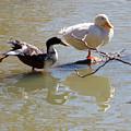 2002-ducks by Martha Abell