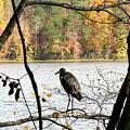 2006-heron Fall2009 by Martha Abell