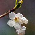 2008 Springtime  6365  by Arvydas Zilys