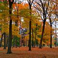 2015 Fall Colors - Washington Crossing State Park-1 by Srinivasan Venkatarajan