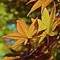 2016 Japanese Maple In The Sunlight by Janis Nussbaum Senungetuk