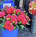 2016 Monona Farmer's Market Blue Bucket Of Dahlias by Janis Nussbaum Senungetuk