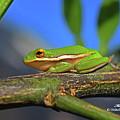 2017 11 04 Frog I by Mark Olshefski