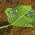 2018 08 31 Sign  H2o Leaf Img_5999 by Mark Olshefski