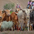 2018 Reno Cattle Drive 3 by Rick Mosher