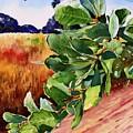 #203 Blue Oak Leaves 2 by William Lum