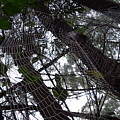 Australia - Spider Web High In The Tree by Jeffrey Shaw