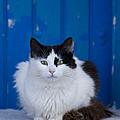 Cat On A Greek Island by Jean-Louis Klein & Marie-Luce Hubert