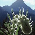 210907 Backlit Thistle And Crestone Needle by Ed Cooper Photography