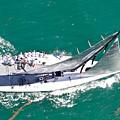 Key West Regatta by Steven Lapkin