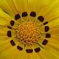 Australia - Yellow Daisy Flower by Jeffrey Shaw