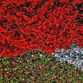 Flower Carpet. by Andy Za