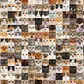 234 Random Cats by Warren Photographic