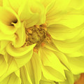 Closeup Of A Colourful Flower by Wael Alreweie