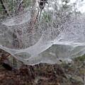 Australia - Concave Spider Web by Jeffrey Shaw