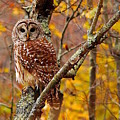 owl by Christine Russell