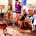 #258 Rruff Dog Park by William Lum