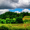 2623- Comsrock Winery by David Lange