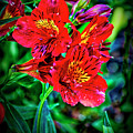 2647- Red Flowers by David Lange